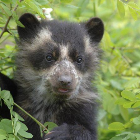 bear, grass, muzzle