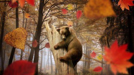 bear, owl, autumn