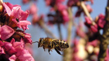 bee, flower, flight