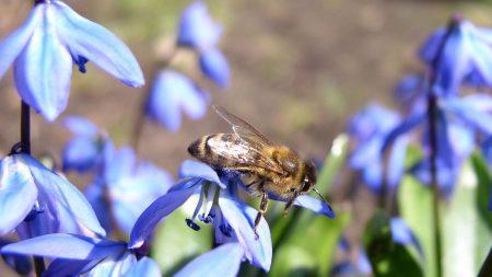 bee, flowers, flight