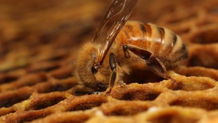 bee, honeycombs, pollination