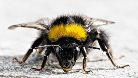 bee, insect, surface