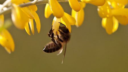 bee, leaves, grass