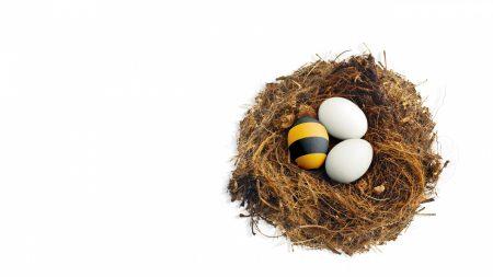 beeline, nes, eggs