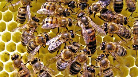 bees, combs, honey