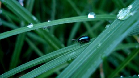 beetle, insect, drops