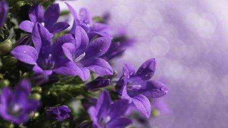 bells, flowers, drops