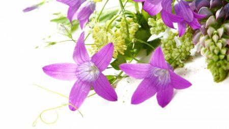 bells, lupine, flower