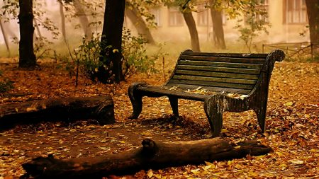 bench, autumn, leaves