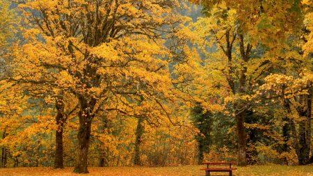 bench, autumn, trees
