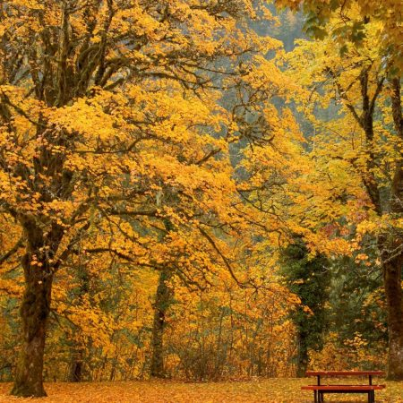 bench, autumn, trees