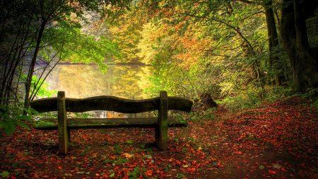 bench, back, leaves