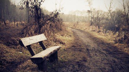 bench, fog, road