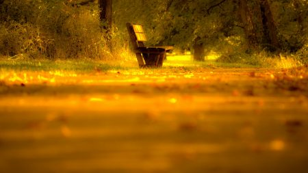 bench, lonely, yellow