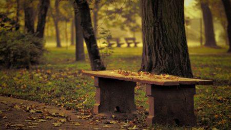 bench, park, leaves