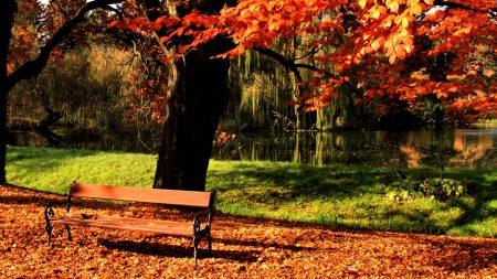 bench, park, tree