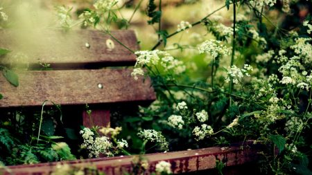 bench, vegetation, summer