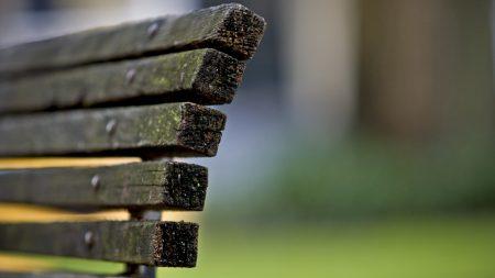 bench, wood, grass