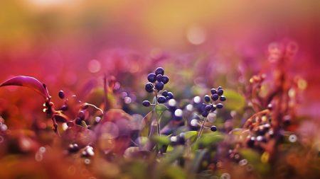 berries, glare, light