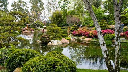 birch, garden, pond