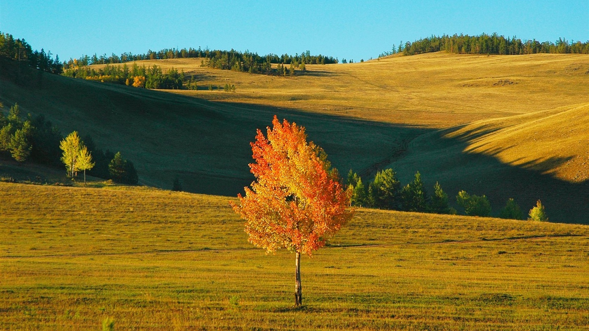 Earnings Disclaimer >> Download Wallpaper 1920x1080 birch, siberia, field, autumn ...