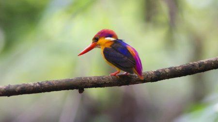bird, beak, branch