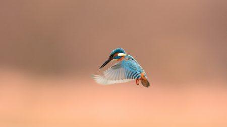 bird, beak, flap