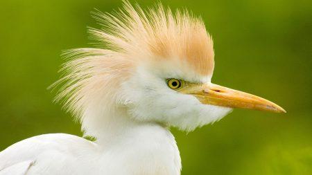 bird, beak, white