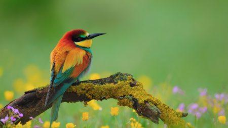 bird, bee-eater, branch