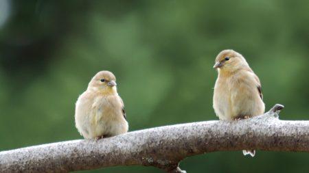 bird, branch, couple