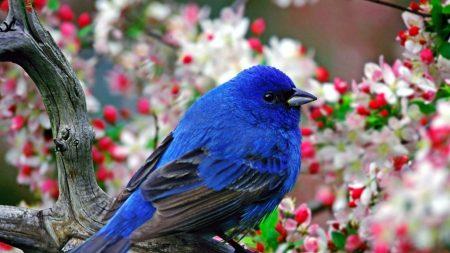 bird, branch, flower