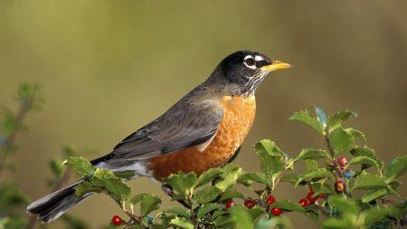 bird, branch, fruit