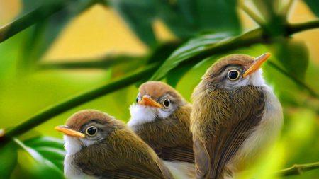 bird, branch, grass