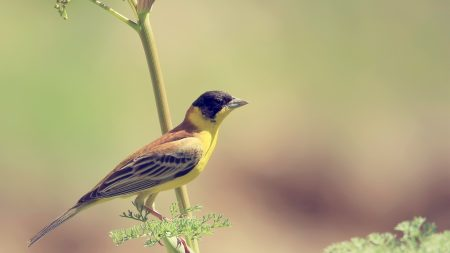 bird, branch, summer