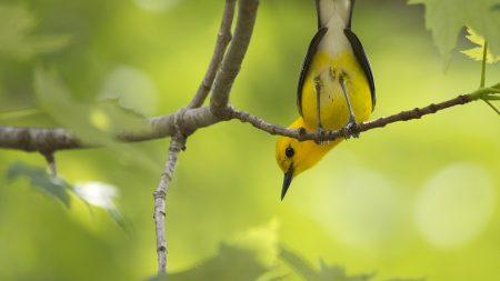 bird, branches, trees