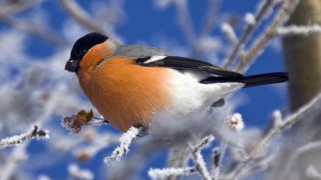 bird, color, branch