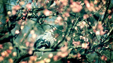 bird, dove, branch