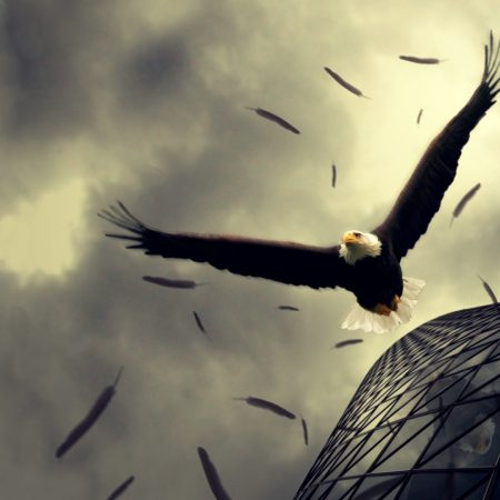 bird, eagle, sky