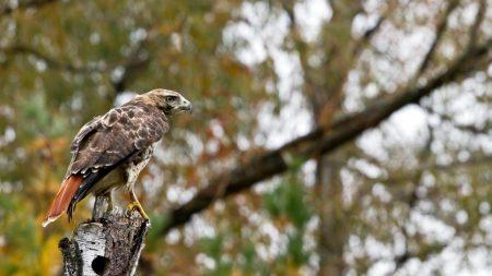 bird, eagle, tree