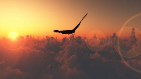 bird, flight, sun