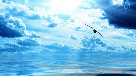 bird, flight, wings