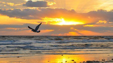 bird, fly, sea
