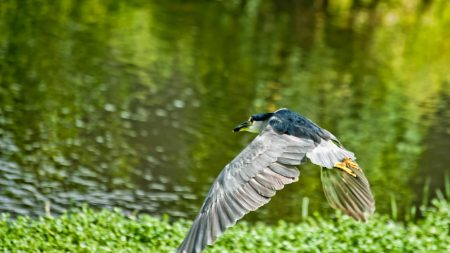 bird, flying, grass