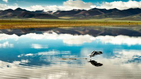 bird, lake, stains