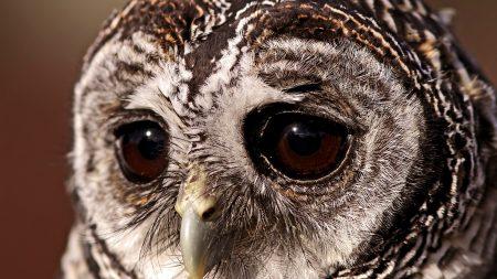 bird, owl, sad eyes