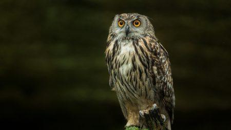 bird, predator, feathers
