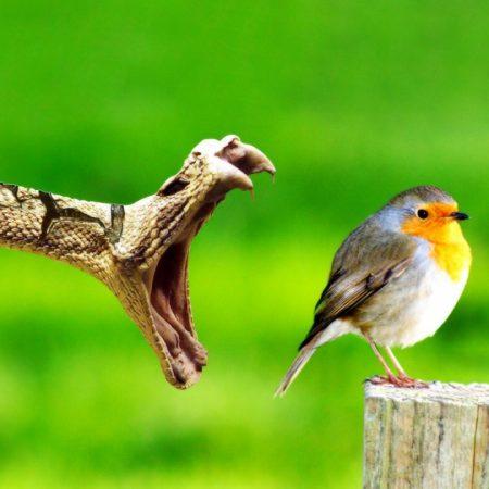 bird, snake, danger