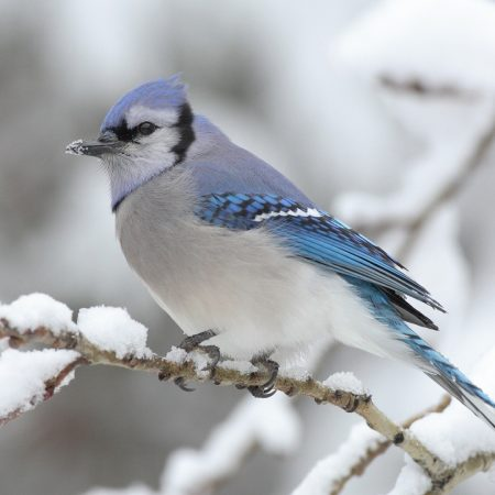 bird, snow, spotted