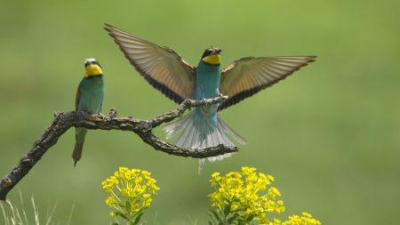 birds, couple, wings