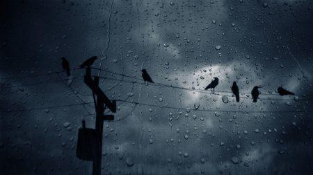 birds, crows, glass